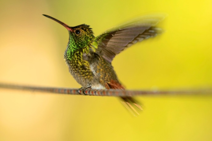After several hundred shots, the best I managed from the hummingbirds in San Ramon, Costa Rica.