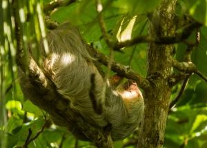 A Sloth's life.