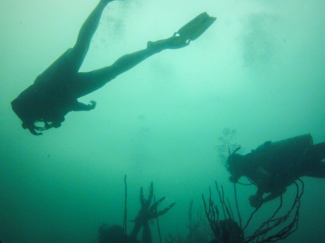 A little murky, maximum visibility was about 8 metres (25ft).