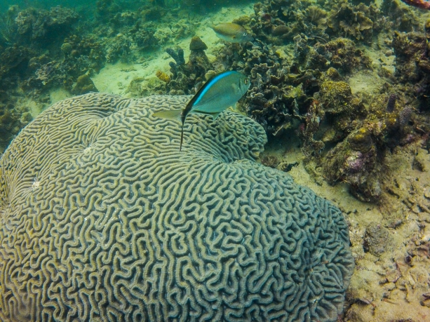 Lots of reef fish around the coral. Something to see everywhere you looked.