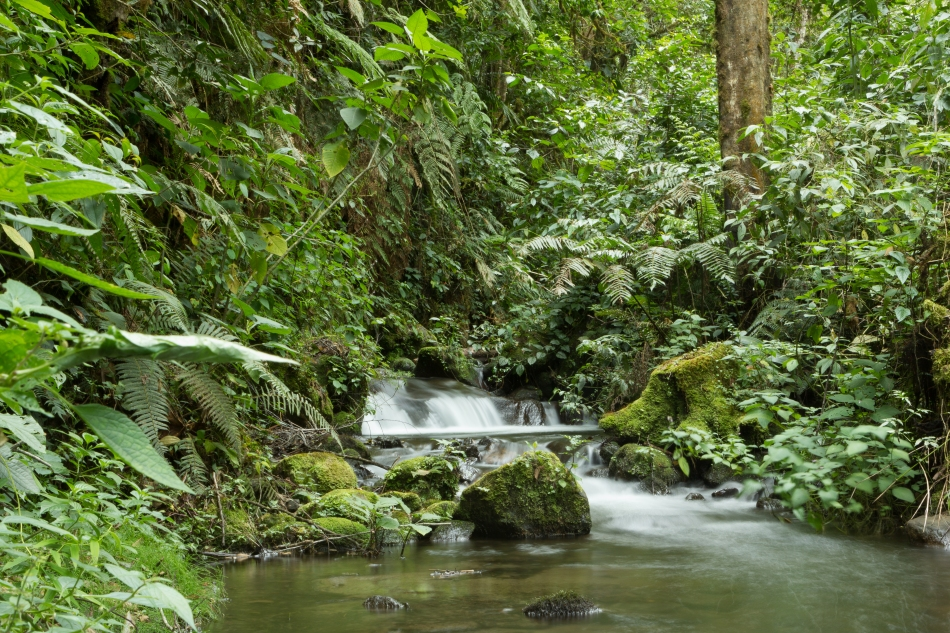 Peaceful place for a rest along the Quetzal Trail.