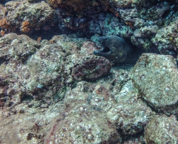 One of the dozens of Moray eels we encountered on our dives.