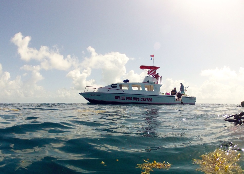 Belize Pro Dive Center's new boat. Specifically for trips to the Blue Hole.