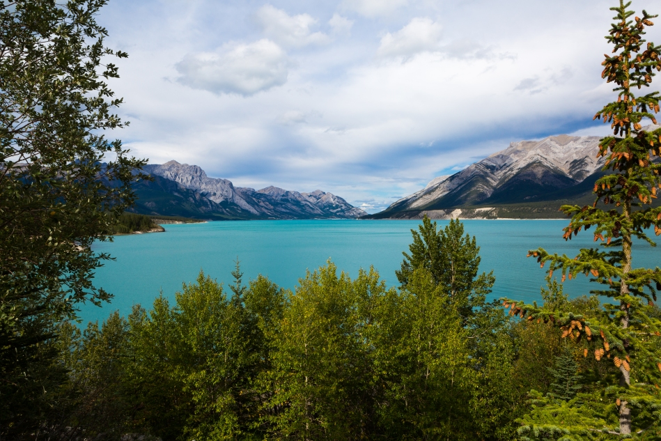 Looking north across Abraham Lake near Cline River.