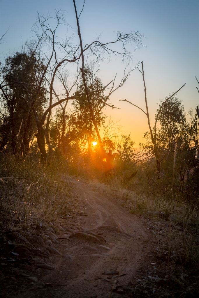A view along one of the trails on Nailcan hill as the sun is just peeking over the horizon.