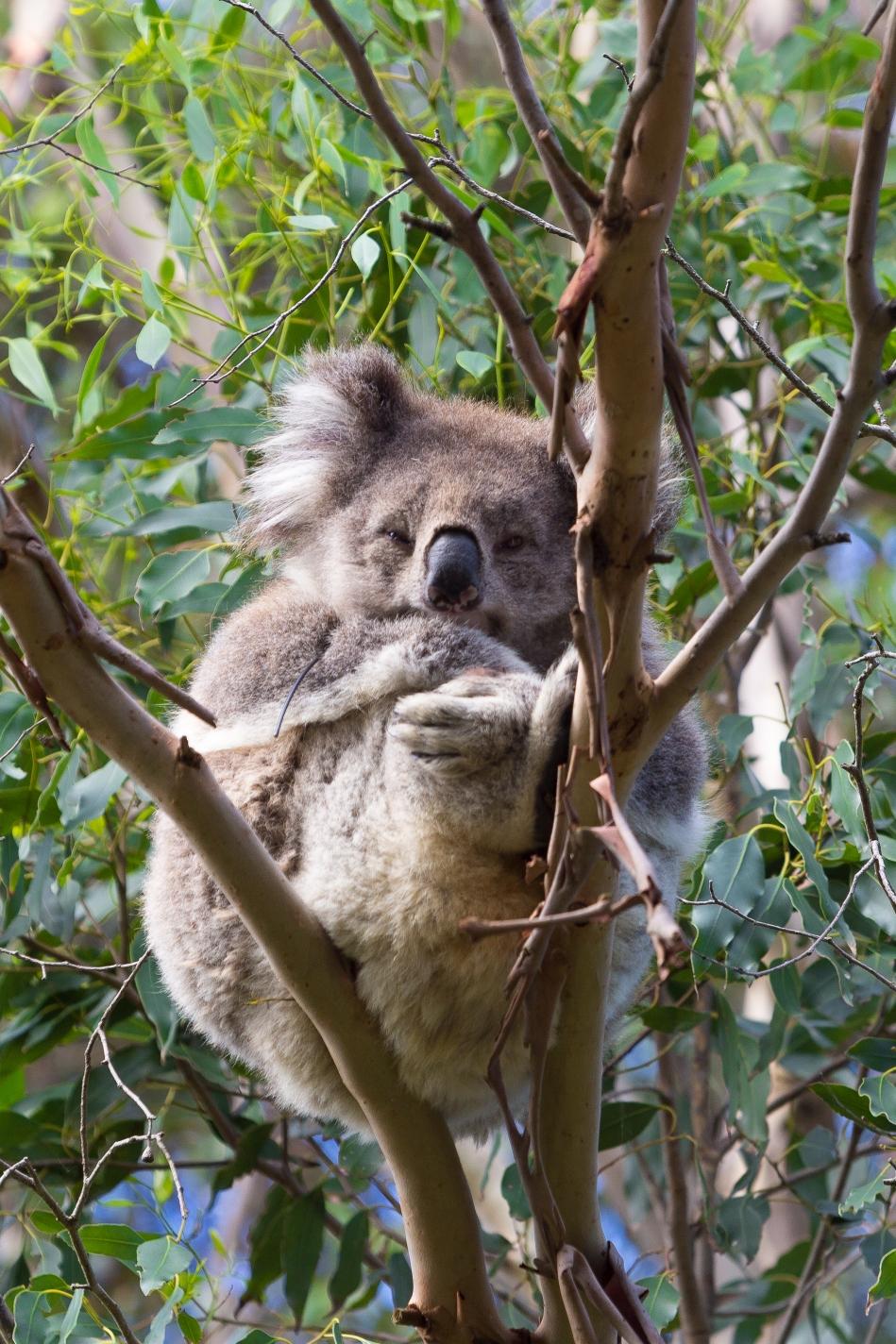 20160321-Australia-01547
