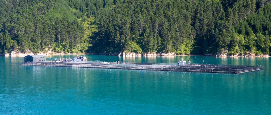 King Salmon Farm