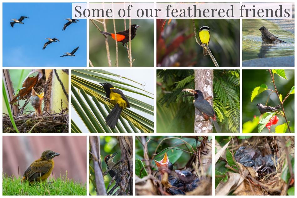 Bird Compilation