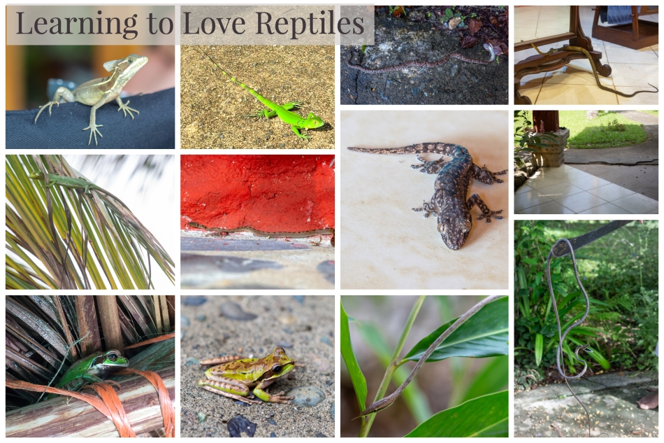 Reptiles Compilation